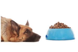 Fasting - dog