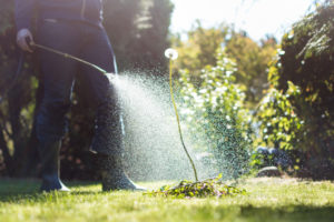 Is glyphosate safe? - lawn